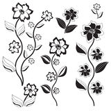 Set of black and white flowers-1 Stock Photography