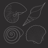 Set of black&white graphic sea shells. Isolated objects. EPS10 Royalty Free Stock Images