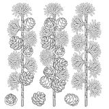 Set of black and white images of larch branches and cones. Isolated vector objects. Stock Images