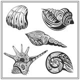 Set black and white seashells Royalty Free Stock Photos