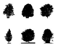 Set of Black and White Silhouette of Deciduous Tree, whose branc Stock Photo