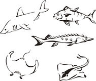 Set of black and white tropical fish Stock Photos