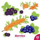 Set of blackberries, blueberries and sea buckthorn Stock Photo