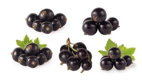 Set of blackcurrant isolated on white. Ripe and tasty black berry with copy space for text. Currants with leaves on a white. Background royalty free stock photos