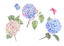 Set of blooming watercolor branch hydrangeas and butterflies Royalty Free Stock Images