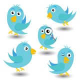 Set of blue birds Stock Photos