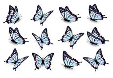 Set of blue butterflies, flying in different directions. Vector royalty free illustration