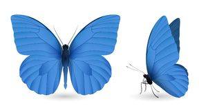 Set of butterflies isolated on white background. Set of blue butterflies isolated on a white background. Appias nero butterfly. Realistic 3D illustration stock illustration