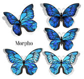 Set blue butterflies morpho Stock Photography