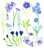 Set of blue flowers: bellflowers, violets, forget-me, cornflower. Set of blue flowers, isolated hand painted watercolor illustration in soft style Stock Photo