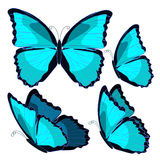 Set blue morpho the butterfly monarch. vector illustration Stock Photo