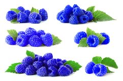 Set with blue raspberries. Rubus leucodermis on white background stock images