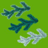 A set of blue spruce branches. Christmas tree - a symbol. The branches of spruce in frost. Vector illustration. A set of blue spruce branches. Christmas tree - a Stock Photography