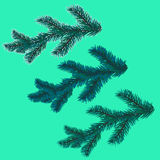 A set of blue spruce branches. Christmas tree - a symbol. illustration Royalty Free Stock Photo
