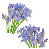 Set blueflag or iris flower Isolated on white background Stock Images