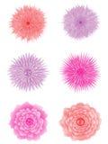 Set Blumen. Lizenzfreie Stockfotografie