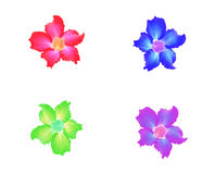 Set Blumen Lizenzfreie Stockfotografie