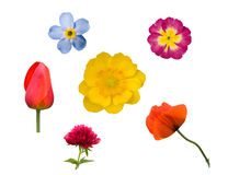 Set Blumen auf Weiß 1 Lizenzfreie Stockbilder