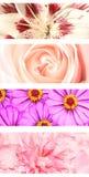 Set Blumenfahnen Lizenzfreies Stockfoto