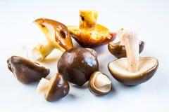 Set of Boletus mushrooms Stock Photography