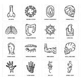 Set of Bones Joint, Big Lips, Hand Palm, Men Elbow, Human Head, Cellule, Ribs, Fingerprint, Nose icons. Set Of 16 simple  icons such as Bones Joint, Big Lips Royalty Free Stock Photography