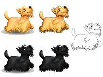 Set Border Collie colorful and contour. The set of cute little dogs of a Scottish Terrier, yellow and black colors. The variants of colorful and contour line art Royalty Free Stock Photos