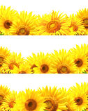 Set of borders with sunflowers Royalty Free Stock Photos