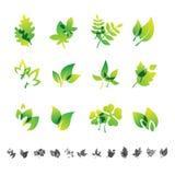 Set of 12 botanical icons. Royalty Free Stock Photo