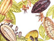 Set of botanical illustration. Watercolor cocoa fruit collection isolated on white background. Hand drawn exotic cacao. Plants. Botanical cacao bean frame royalty free illustration