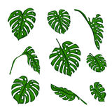 A set of Botanical tropical fern leaves to create bushes and trees in computer graphics. The elements of the game Royalty Free Stock Photography