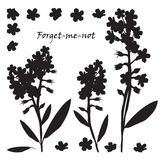 Set of bouquet beautiful forget-me-not flowers Royalty Free Stock Photos