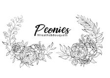 Set of bouquets peonies. Flower arrangement with peonies. Spring and summer bouquet. Vector design elements.Black and white. Engraving Stock Image