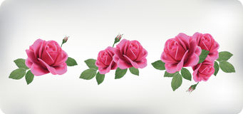 Set of bouquets of roses vector illustration