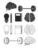 Set of brain icons. Set of human brains icons vector illustration graphic design royalty free illustration