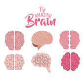 Set brains human  icon Royalty Free Stock Images