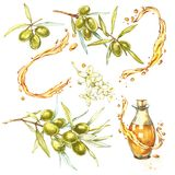 Set A branch of ripe green olives is juicy poured with oil. Drops and splashes of olive oil. Watercolor and botanical. Illustration isolated on white background vector illustration