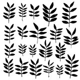Set of branch silhouettes with leaves. Stock Photos