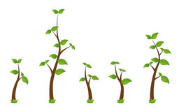Set of branches vector illustration