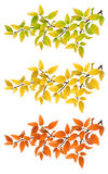 Set branches with autumn leaves Royalty Free Stock Photo
