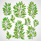 Set of branches with green leaves. Vector Stock Image