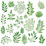 Set of branches Royalty Free Stock Image