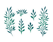 Set of branches with leaves and herbs Stock Photos