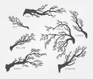 Set of branches, twigs of different trees Stock Photos