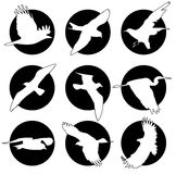 Set of brand collection of logos with birds Stock Photos