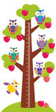 Set bright colorful owls Big apple-tree with green leaves and red apples on white background Children height meter wall. Sticker, kids measure. Vector Royalty Free Stock Photos