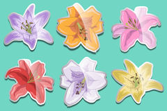 Set of bright stickers of lilies for your design.  Royalty Free Stock Images