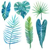 Set of bright watercolor tropical leaves royalty free illustration