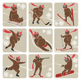 Set of Brown bear in winter sport.Humorous illustr Royalty Free Stock Image