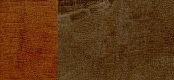 Set of brown crocodile suede leather texture Stock Images
