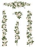 Set Brushes Flowers Climbing White Roses Royalty Free Stock Images